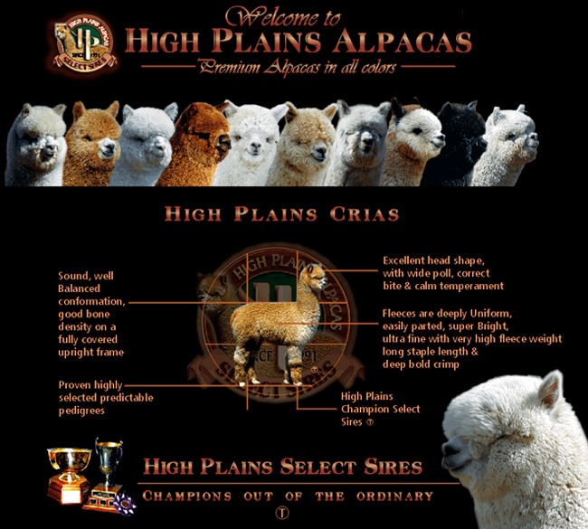 High Plains Crias; excellent head shape, well balanced conformation, good bone density, full covered upright frame, proven highly selected predictable pedigrees